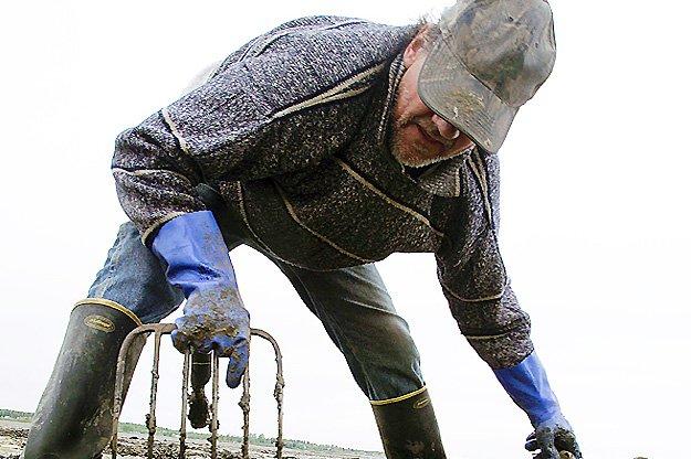 Clam Digging in Maine